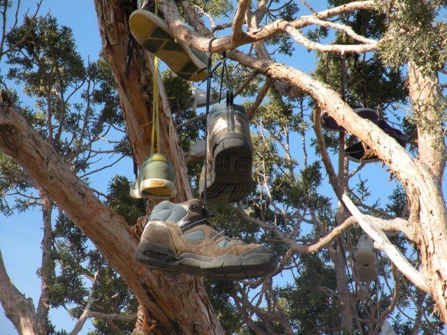 nevada-shoe-tree-2