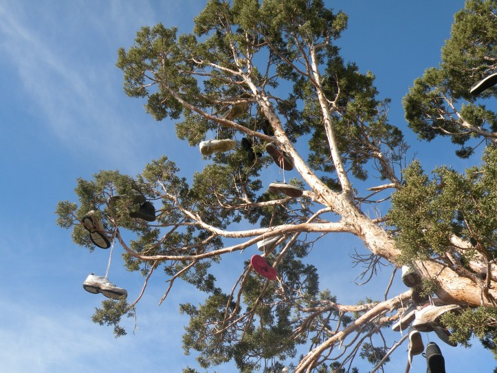 nevada-shoe-tree-4