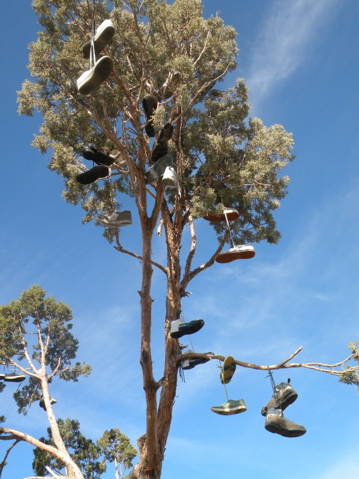 shoe-tree-5