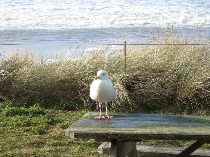 Rockaway Gull