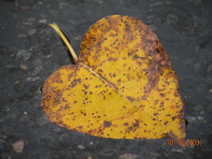 i heart nature