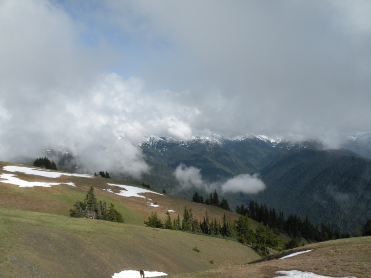 View from Hurricane Ridge Visitor Center, Olympic National Park... and a deer