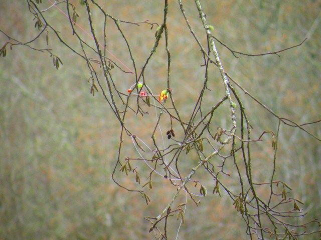 Fisherman's Tree Ornaments