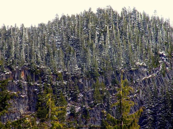 in Mt Rainier National Park