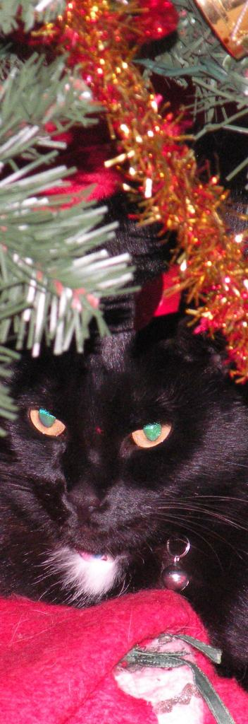 Look at Mint, Lurking Under the Tree