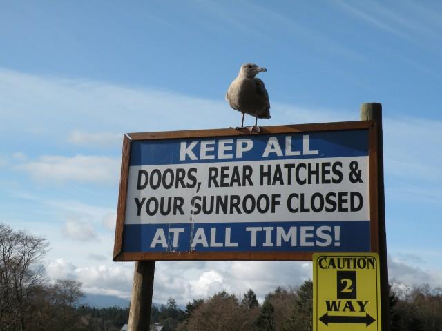 yeah - keep sunroof closed!